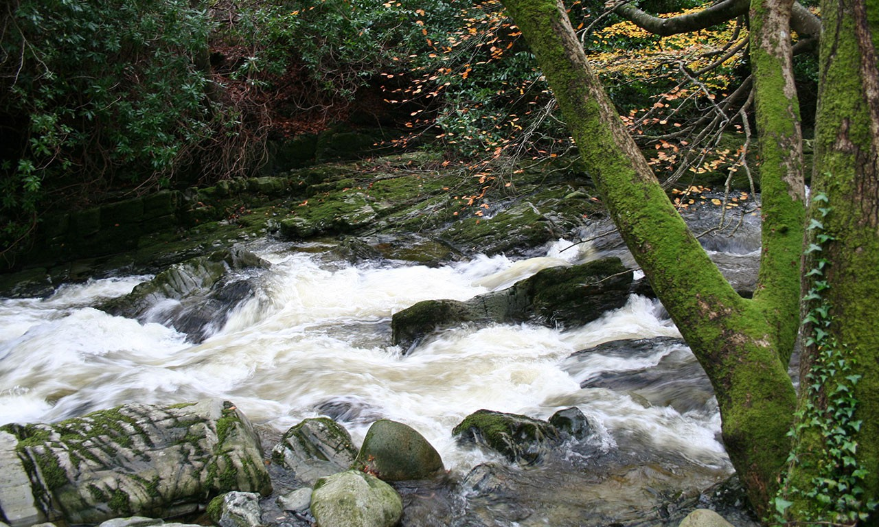 tollymore